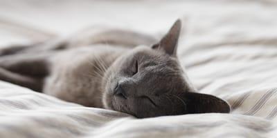 ¿Prefieres los gatos tranquilos o activos?