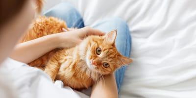 ¿Cómo sería, idealmente, la relación con tu gato?