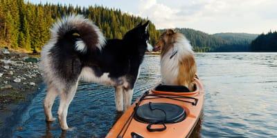 ¿Qué tan activo prefieres que sea tu perro?