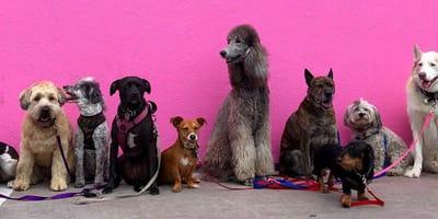 Test: ¿Qué raza de perro es la ideal para ti?