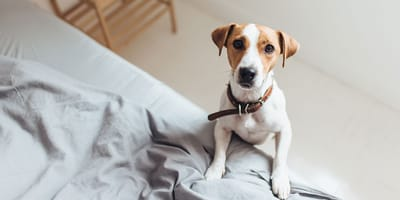 ¿Cuánto tiempo al día va a quedarse solo tu perro?